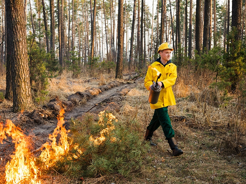 Prescribed burn operation
